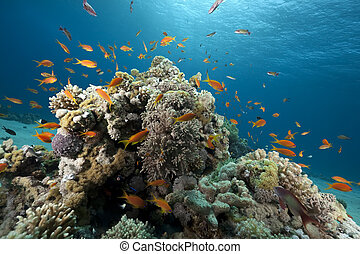 ocean, coral and fish - Ocean, coral and fish taken in the...