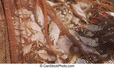 Ocean fish caught in nets - fishing net full of fish caught
