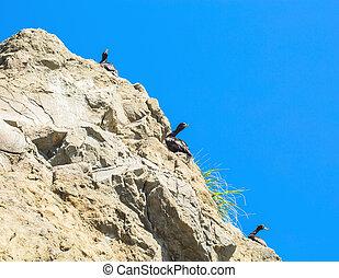 Ocean seagulls on a rock