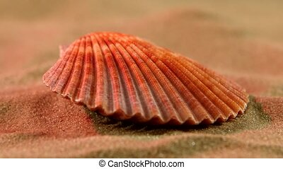 Ocean shell on sand, pink light, close up, rotation