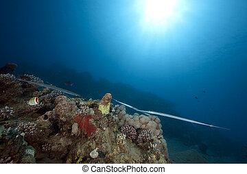 ocean, sun and cornetfish