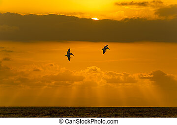 The sun shows itself behind the clouds as two souls glide over the ocean.