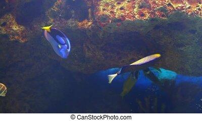 Ocean tropical fish in seawater Aquarium
