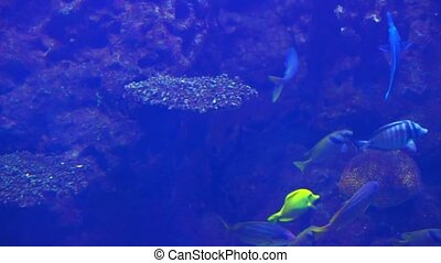 Ocean tropical fish in seawater Aquarium 1
