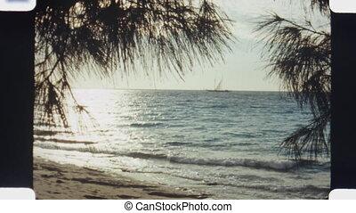 Ocean view. (Vintage 1970s film) - Ocean view through trees...