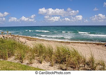 Ocean Waves and Sand Dunes