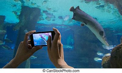 oceanarium, foto, toma, mujer