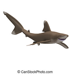 Oceanic whitetip shark - dangerous shark. 3D render with...
