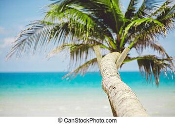oceano, tropicale, palma, fondo, sfocato, spiaggia, vista