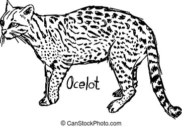ocelot - vector illustration sketch hand drawn with black lines, isolated on white background