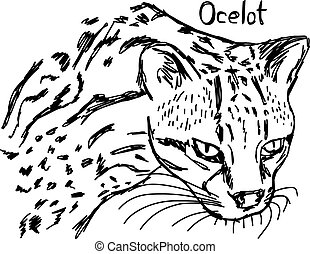 ocelot's head - vector illustration sketch hand drawn with black lines, isolated on white background