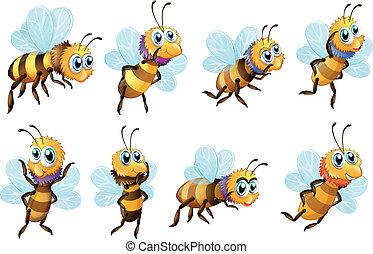 ocho, abejas, en, diferente, posiciones