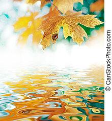 October Autumn Maple Leaf - Closeup of an autumn orange ...