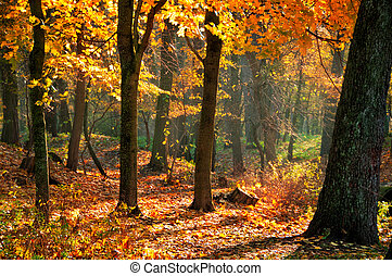 October - Fall landscape in the park with red and yellow...