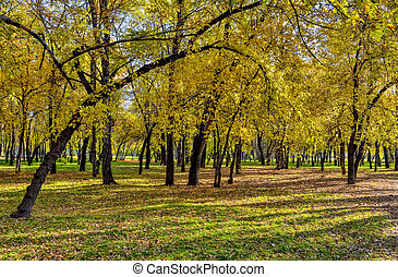 October in city park - bright colorful autumn landscape