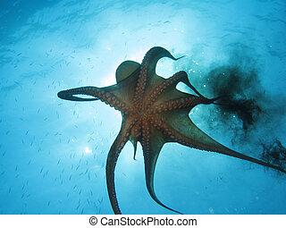 Octopus using black ink. Shot captured in the wild.
