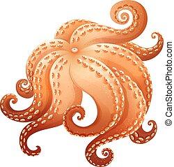 Octopus - Close up giant octapus legs