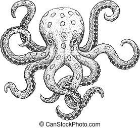 Octopus Engraving Illustration - Blue-Ringed Octopus - ...