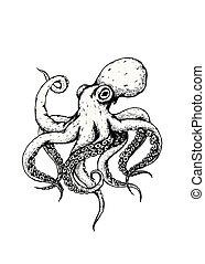 octopus isolated on white background