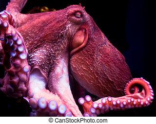 Octopus - Nice smiling octopus deep under water