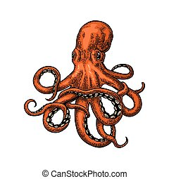 Octopus. Sea Monster