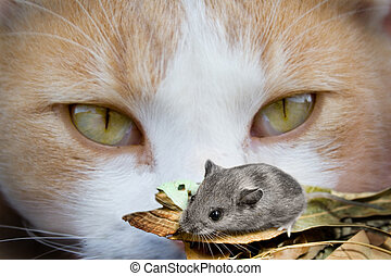 oczy, mysz, kot