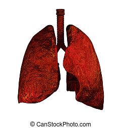 od, fumeurs, poumons