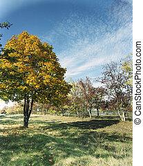 od, jasny, jesień, drzewo
