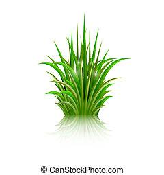 odbicie, odizolowany, tło., wektor, zieleń biała, trawa