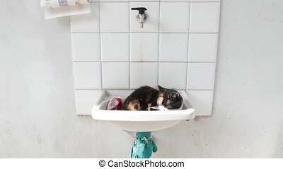 Female cat sleeping in a washbasin