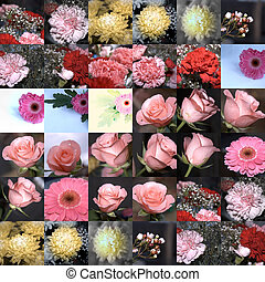 odd one out - grid of flowers with the odd picture in the ...