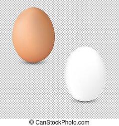 odizolowany, 2, tło, świeży, jajko, przeźroczysty