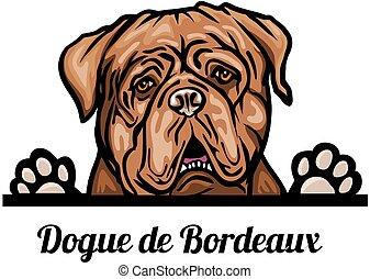 odizolowany, breed., psy, biały, kolor, od, dogue, wizerunek...