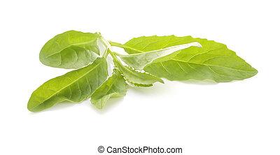 odizolowany, liść, zielone tło, biały, roślina