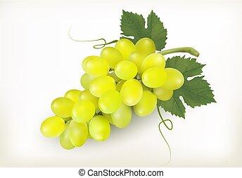 odizolowany, owoc, tło., wektor, zielone winogrona, biały