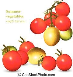 odizolowany, realistyczny, wektor, rozwój, biały, pomidory
