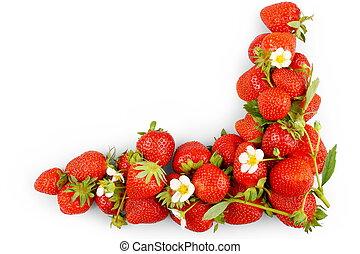 odizolowany, truskawki, tło, czerwony biel, świeży