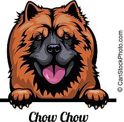 odizolowany, wizerunek, czau-czau, głowa, breed., psy, farba...