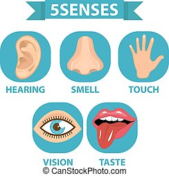 odore, sensi, illustration., tocco, set., isolato, taste., fondo., vettore, 5, visione, udienza, bianco, icona