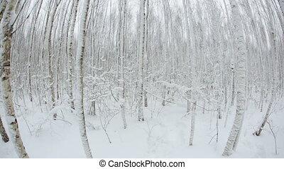 oeil, hiver, fish, arbres, snow., forêt, lens.