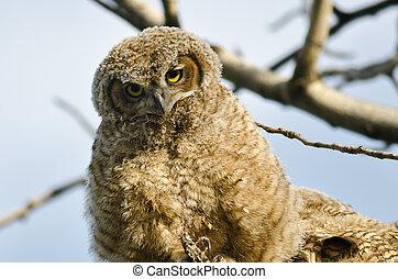 oeil, nid, jeune, direct, contact, owlet, confection, sien
