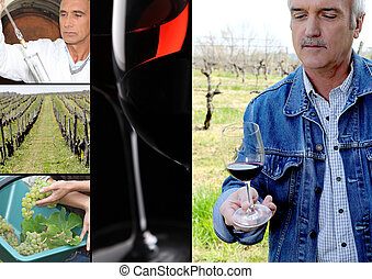 Oenologist, wine maker, vines and a red wine glass