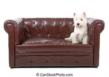 oeste terrier montanhoso branco, cão