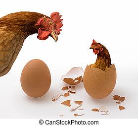 oeuf poulet, ou