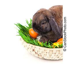 oeufs, fond, lapin, panier, blanc, Paques