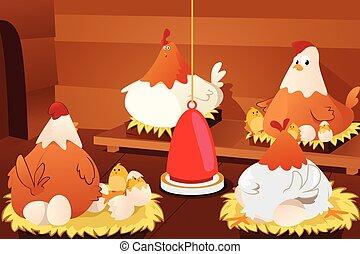 oeufs poulet, hachure