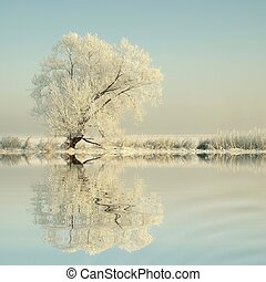 oever, boom winter, meer