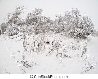 oever, winter, meer