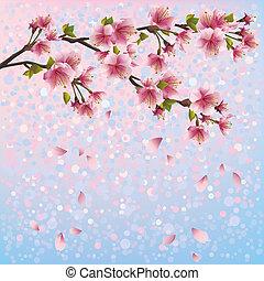 of, kers, card., kleurrijke, blossom , lente, -, japanner, illustratie, groet, boompje, vector, sakura, achtergrond, uitnodiging, floral, style., achtergrond