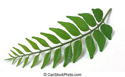 oferta, hojas verdes, curry